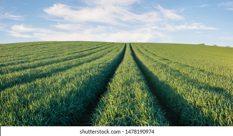 panorama of spring, green field against the blue sky