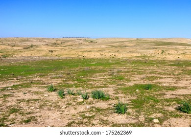 Panorama of a stone desert with green grass and bushes