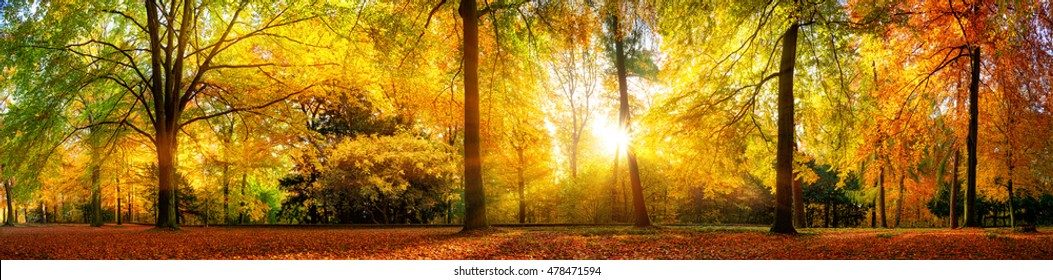 Panorama of a stunning forest scenery in autumn, a scenic landscape with pleasant warm sunshine