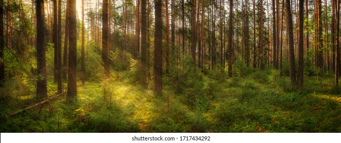 Panorama of a summer forest with a clearing illuminated by sunlight