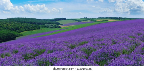 Panorama of summer hills landscape with blooming lavender fields in moldova.