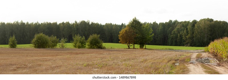 Panorama of the summer-autumn rural landscape with a cleaned brown field and a field with greenish shoots. Trees and road dividing fields, green forest on the horizon.