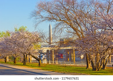 Panorama at sunrise of blossoming cherry trees in East Potomac Park of Washington DC, USA. A view on Potomac River with cherry trees alley and the Washington Monument on background.