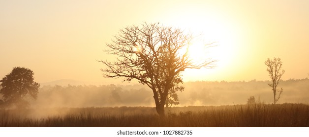 A panorama of a sunrise at Kanha National park, Madhya Pradesh, India. The mist and light give a magical start to the day.