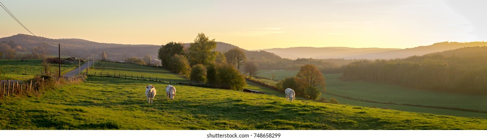panorama of a sunset over the countryside with cows in a meadow and mountains at the bottom