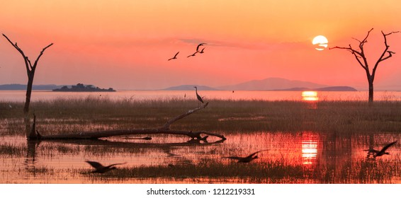 Panorama of a sunset over Lake Kariba with a silhouette of a Grey Heron and Egyptian Geese in flight.  Matusadona NationalPark, Zimbabwe
