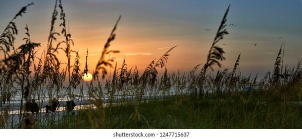 Panorama of sunset through reeds on beach,Anna Maria Island,Florida