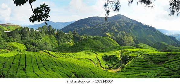 Panorama of the tea plantation in the Cameron Highlands in Malaysia. Wonderful green landscape and panoramic view.