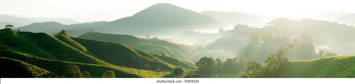 Panorama of Tea Plantations at Cameron Highlands Malaysia