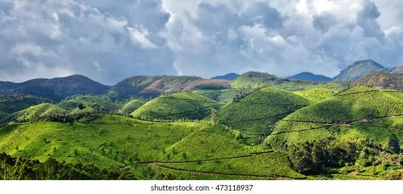 Panorama of tea plantations. Munnar, Kerala, India