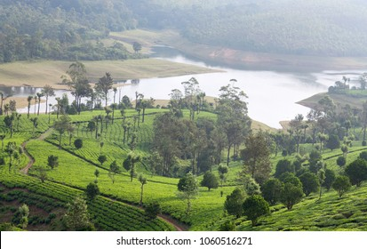 Panorama of tea plantations in Western Ghats range of mountains, Kerala, South India.