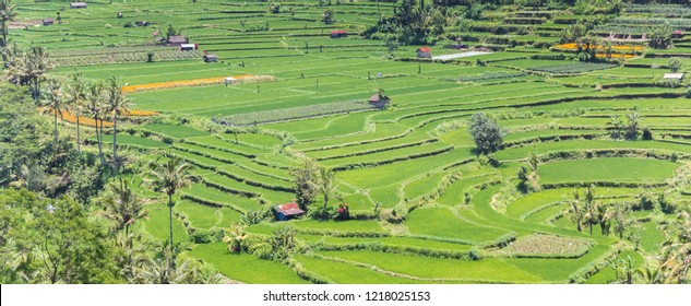 Panorama of a terraced rice field on Bali, Indonesia