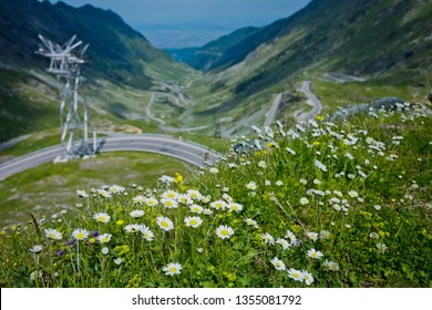 Panorama of Transfagarasan pass - DN7C in summer. Crossing Carpathian mountains in Romania, Transfagarasan is one of the most spectacular mountain roads in the world. Focus on flowers