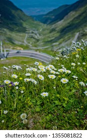 Panorama of Transfagarasan pass - DN7C in summer. Crossing Carpathian mountains in Romania, Transfagarasan is one of the most spectacular mountain roads in the world. Focus on flowers. Vertical view