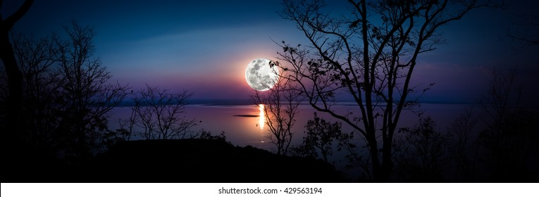 Panorama. Tree against sky over tranquil lake. Silhouettes of woods and beautiful moonrise, bright full moon would make a nice picture. Beauty of nature use as background. Outdoors.