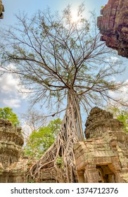 Panorama of tree with roots growing in temple ruins in Ta Prohm, or Jungle Temple, in Angkor Complex of Cambodia.