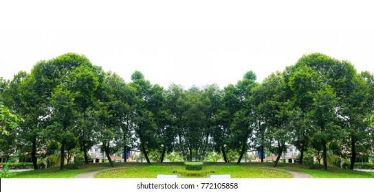 Panorama tree White background Banner
