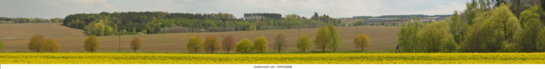 panorama of trees alley in spring with different starting colors of foliage, ulice - Shutterstock ID 1599120688