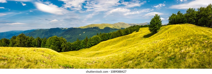 panorama of trees on the grassy hillside. Svydovets mountain ridge in the distance. beautiful summer afternoon nature scenery of Carpathian mountains, Ukraine