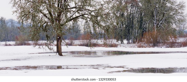 Panorama of trees in a snow covered field punctuated with red brush in the background