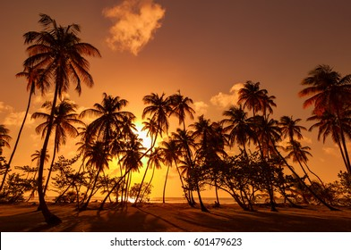 Panorama in Trinidad and Tobago, silhouette of coconut palm trees on colorful sun set, Colorful sunset sky with silhouette coconut palm trees and small beach in Trinidad and Tobago,beautiful sunset