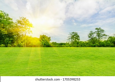Panorama and tropical garden and green grass, the sun shines.