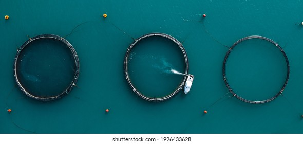 Panorama of tuna farm rings in the sea. Top view. Malta