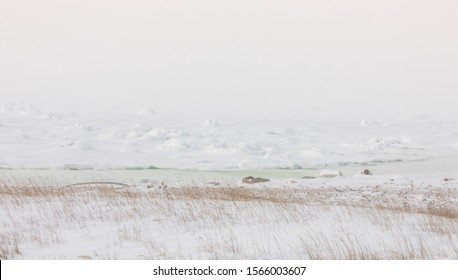 Panorama of tundra landscape in winter on Hudson Bay near Churchill, Manitoba, Canada.