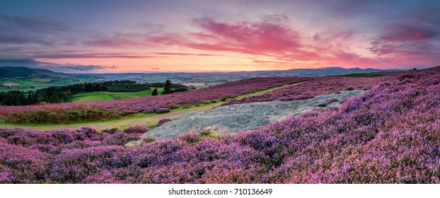 Panorama at Twilight over Rothbury Heather / Rothbury Terraces walk offers views over the Coquet Valley to the Simonside and Cheviot Hills, heather covers the hillside in summer