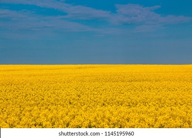 Panorama of Ukraine to the Independence day of Ukraine, open field and blue sky