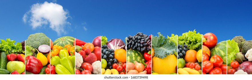 Panorama vegetables and fruits separated by vertical lines against bright blue sky. Copy space