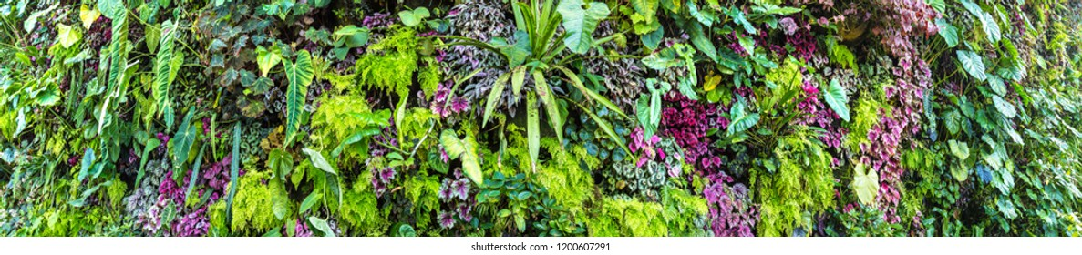 Panorama of Vertical garden with tropical green leaf and flowers. Nature background