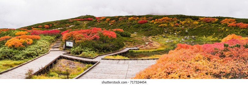 Panorama view of Autumn leaves of alpine plants at Asahidake mountain, Daisetsuzan National park, Asahikawa, Hokkaido, Japan