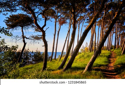 Panorama from the view of the Baltic sea cliff between the trees at the Baltic Sea.