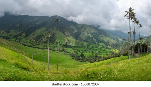 Panorama view of the Cocora Valley in Salento, Colombia. It is home to the national tree of Colombia, the tall wax palms. The background are green rolling hills covered partly in the fog.