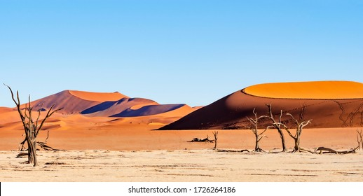 Panorama view of Dead Camelthorn Trees against red dunes and blue sky in Deadvlei, Sossusvlei. Namib-Naukluft National Park, Namibia, Africa
