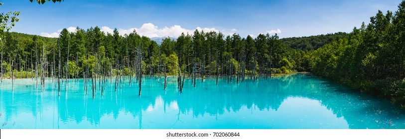 """Panorama view of Dry tree and forest at Shirogane Blue Pond in Biei Town, Hokkaido, Japan. Biei town is located in the middle of """"Asahikawa city"""" and """"Furano city"""""""
