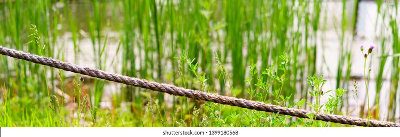 Panorama view of flabby rope fence on green reed and wild grass background, image of rope fence and Wetland