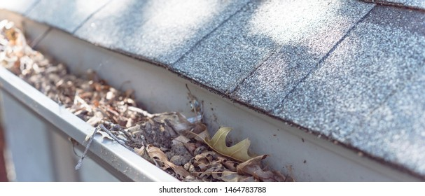 Panorama view gutter near roof shingles of residential house full of dried leaves and dirty need to clean-up. Gutter cleaning and home maintenance concept