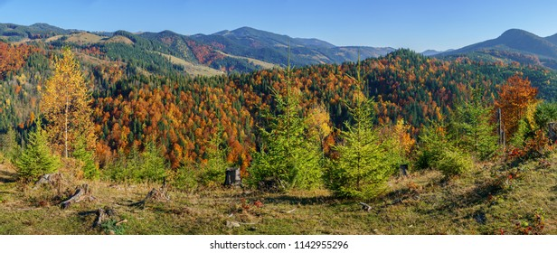 Panorama view hills mountain colorful forest many trees in sunny autumn day.