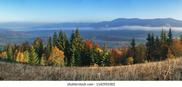 Panorama view hills mountain colorful forest many trees with fog in sunny autumn morning.