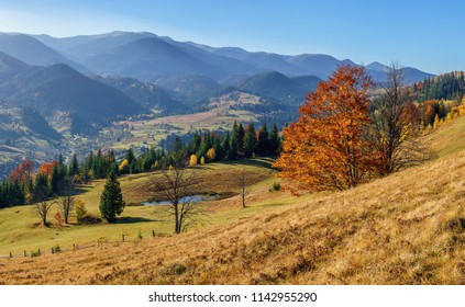 Panorama view hills mountain with orange trees and lake in sunny autumn day.