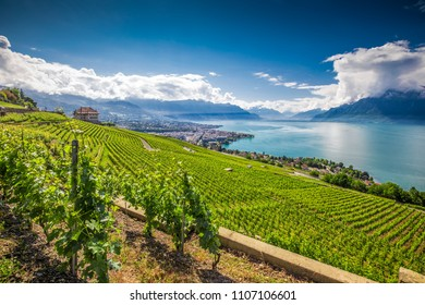Panorama view of Montreux city with Swiss Alps, lake Geneva and vineyard on Lavaux region, Canton Vaud, Switzerland, Europe.