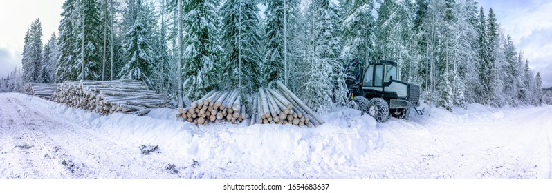 Panorama view on commercial timber, pine tree logs after clear cut, winter forest, Northern Sweden. Snow cover trunks, cloudy winter day, snow road in Lappland, Scandinavia. Modern Swedish forestry