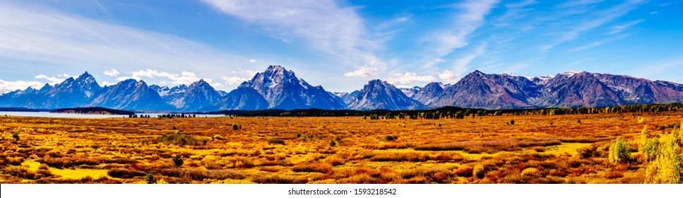 Panorama View of Orange and Yellow Fall Colors in Grand Teton National Park with Teton Mountain Range in the background. Viewed from the Jackson Lake Lodge in Wyoming, United Sates
