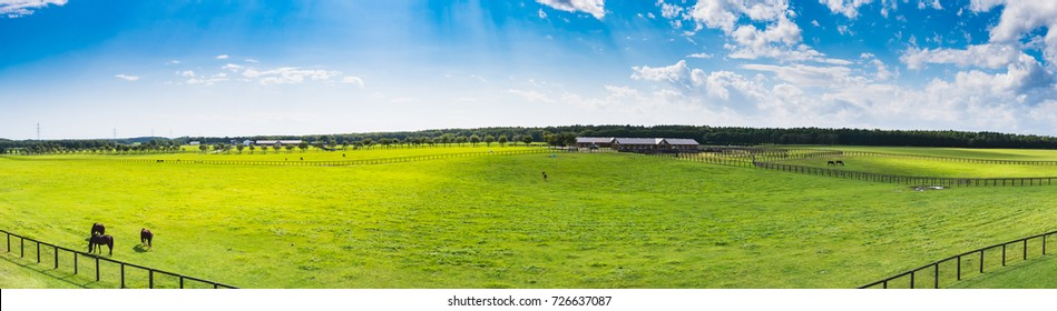 Panorama view of Racehorse grazing on the ranch in Tomakomai City, Hokkaido, Japan