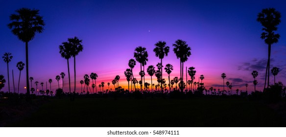 Panorama view Silhouette of plam trees with colourful sunset and twilight sky,Thailand