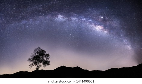 Panorama view of universe space shot of nebula and milky way galaxy with stars on blue night sky. Beautiful scene of silhouette of lonely high old pine tree on the hill under amazing starry night sky