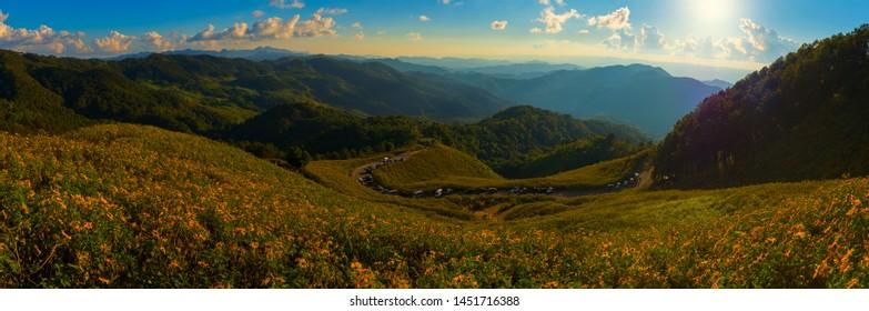 Panorama view of Yellow flowers (Tithonia diversifolia) on the mountain, Tung Bua Tong viewpoint in Doi Mae U Kho, Khun Yuam, Mae Hong Son, Thailand