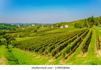 Panorama of the vineyard in the Alto Monferrato called Langhe (Asti, Piedmont, Italy), renowned for the production of wine and World Heritage Site.